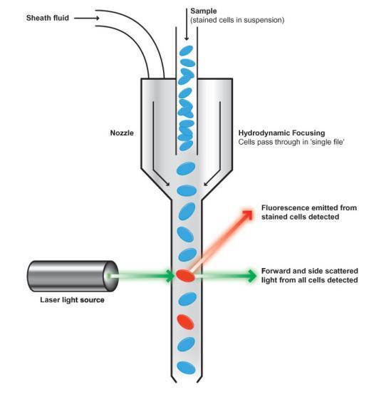 Flow-Cytometry-Diagram2
